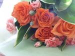 オレンジのバラ.JPG