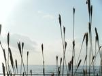 秋の海.JPG